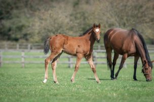 Filly out of FELLBECK
