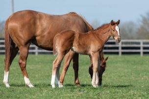 Filly out of SULTRY